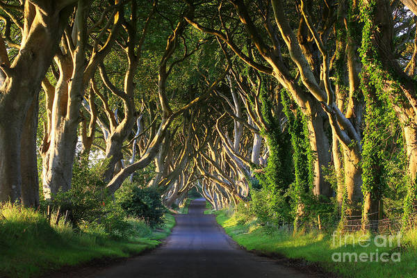 Dark Hedges Vi Poster