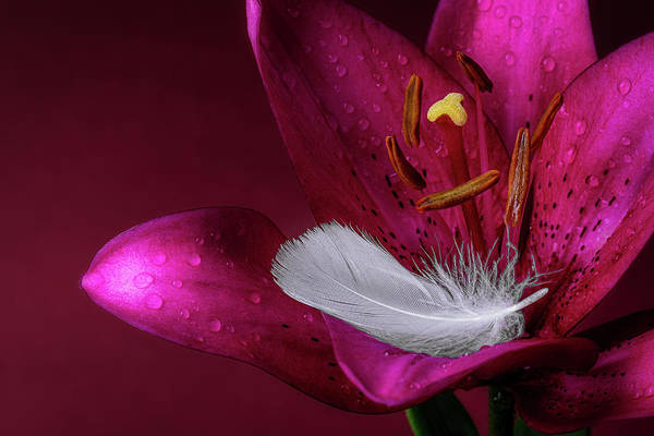 Daylily With Feather Poster