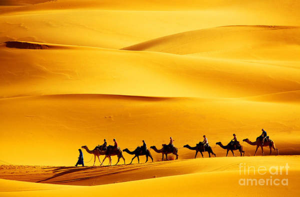 Desert Caravan Poster