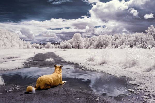 Poster featuring the photograph Doggy Daydream by Nicole Young