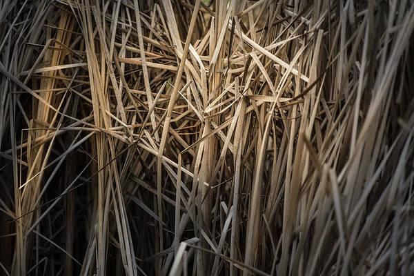 Dried Wild Grass II Poster