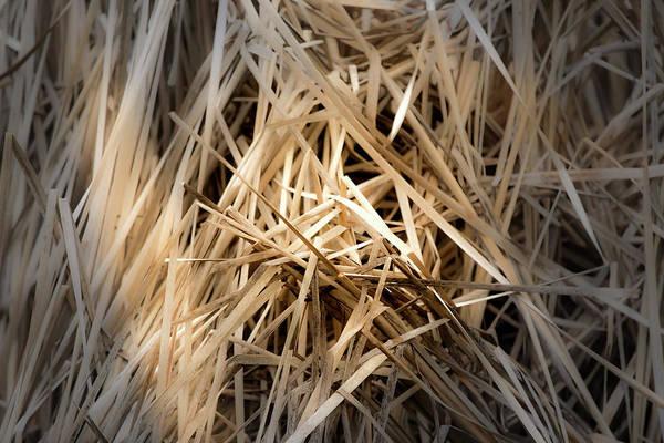 Dried Wild Grass I Poster