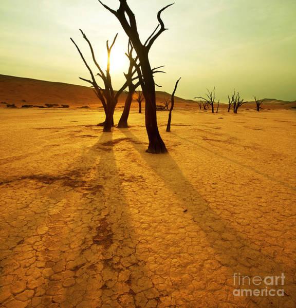 Dry Trees In Namib Desert Poster