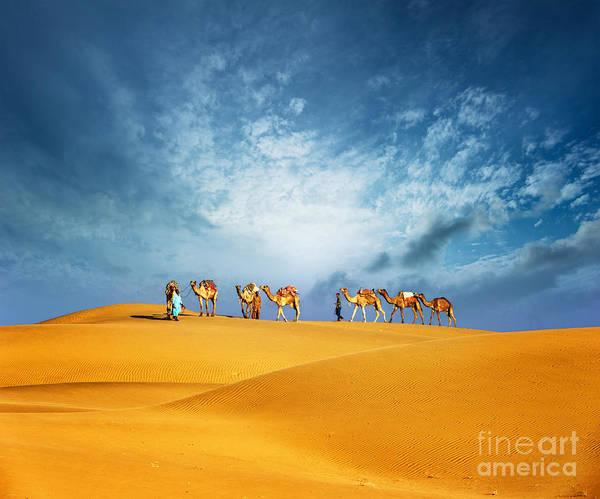 Dubai Desert Camel Safari. Arab Poster
