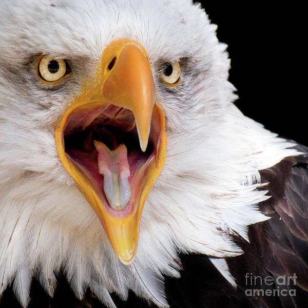 Eagle Calls Poster