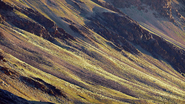 Poster featuring the photograph Early Morning Light On The Hillside In Sarchu by Whitney Goodey