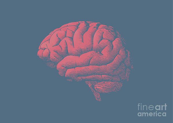 Engraving Brain Illustration With Tint Poster