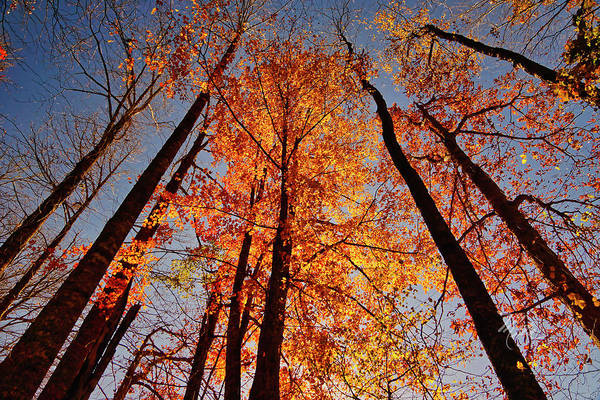 Fall Trees Sky Poster