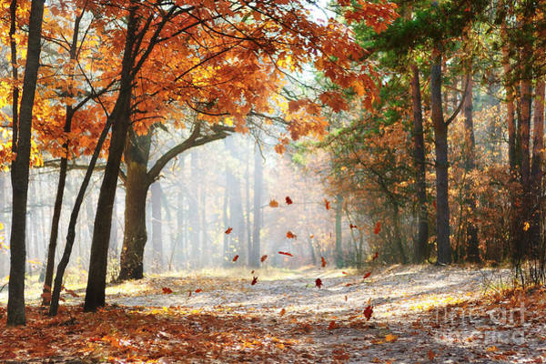 Falling Oak Leaves On The Scenic Autumn Poster