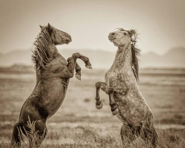 Fighting Stallions 2 Poster