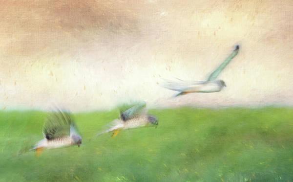 Flight Of The Harrier Poster