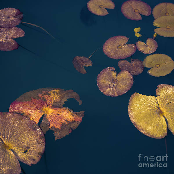 Floating Lotus Leaves On The Water Bed Poster
