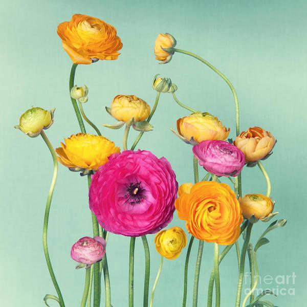 Flower Arrangement Of Colorful Poster