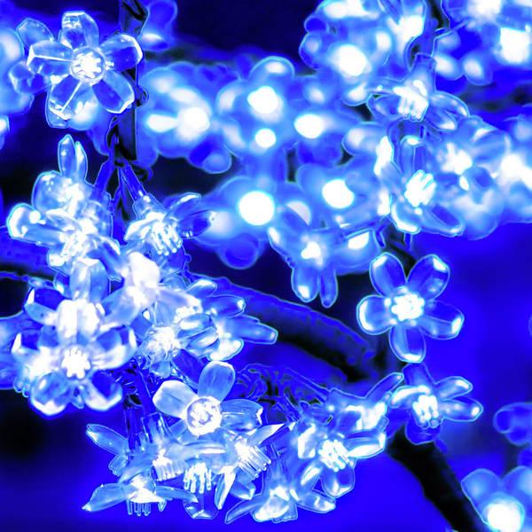 Flower Lights 1 Poster
