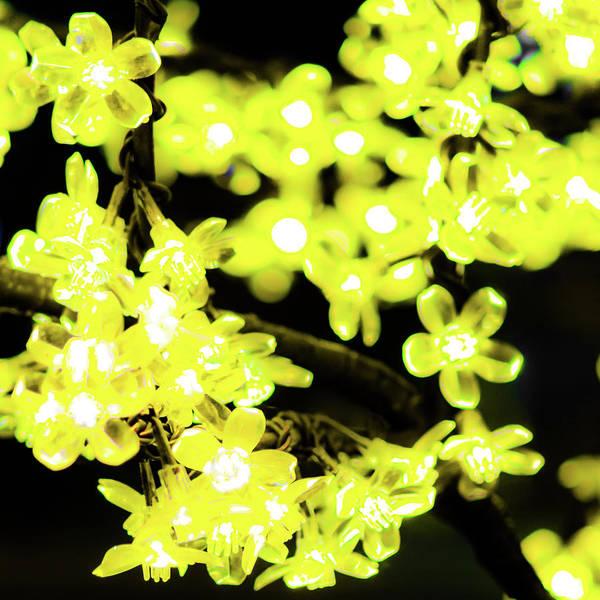 Flower Lights 6 Poster