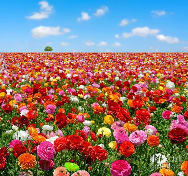 Flowers Field Poster