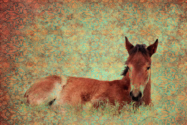 Flowery Foal Poster