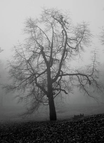 Foggy Tree In Black And White Poster