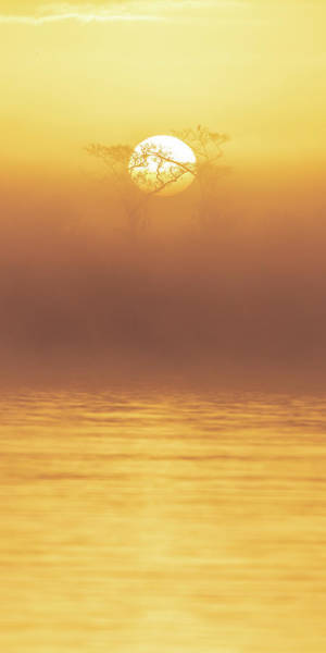 Foggy Wetlands Sunrise Poster
