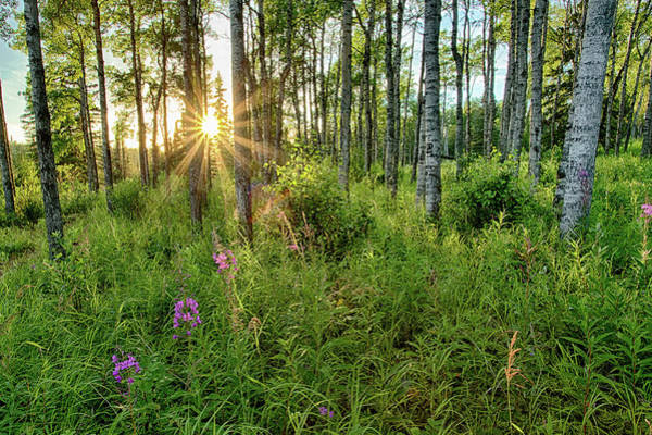 Forest Growth Alaska Poster