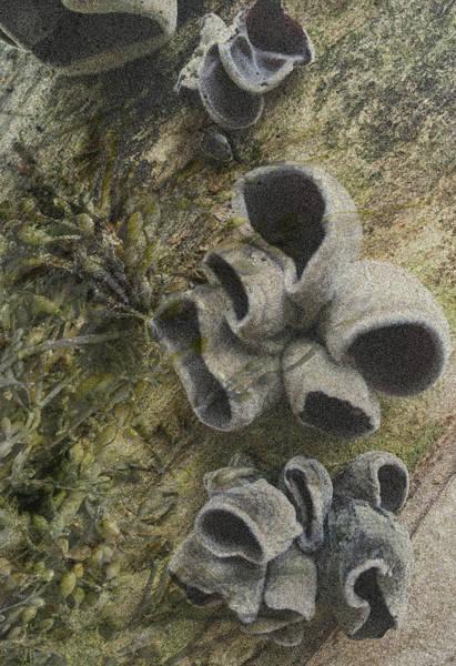 Fungi And Algae Poster