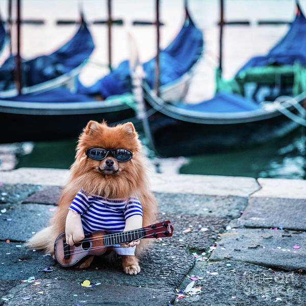 Funny Dog At The Carnival In Venice Poster