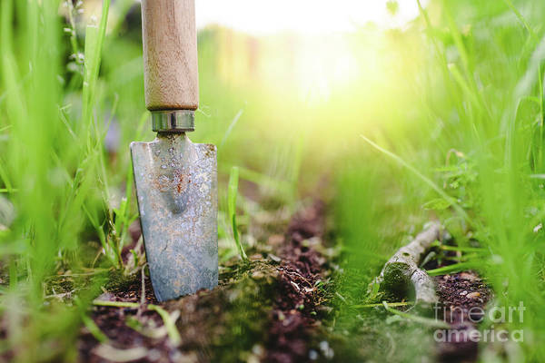 Gardening Shovel In An Orchard During The Gardener's Rest Poster