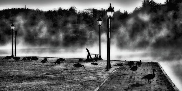 Geese In The Mist Poster