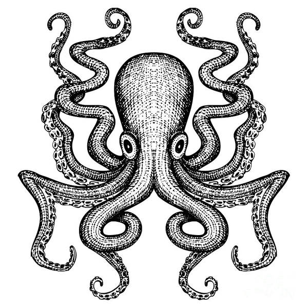 Giant Octopus - Sea Monster Poster