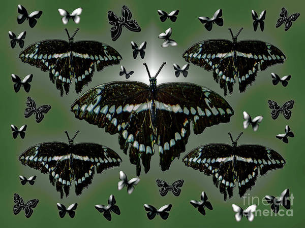 Giant Swallowtail Butterflies Poster