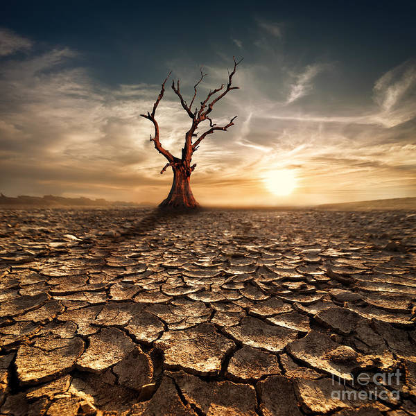 Global Warming Concept. Lonely Dead Poster