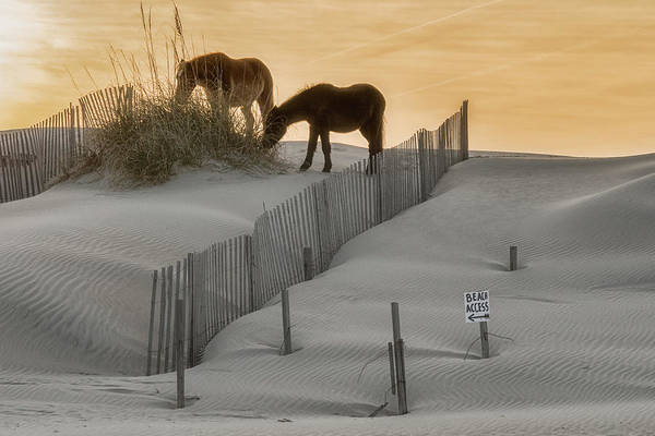 Golden Horses Poster