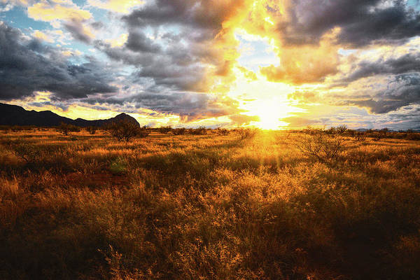 Poster featuring the photograph Golden Light Of Southern Arizona by Chance Kafka
