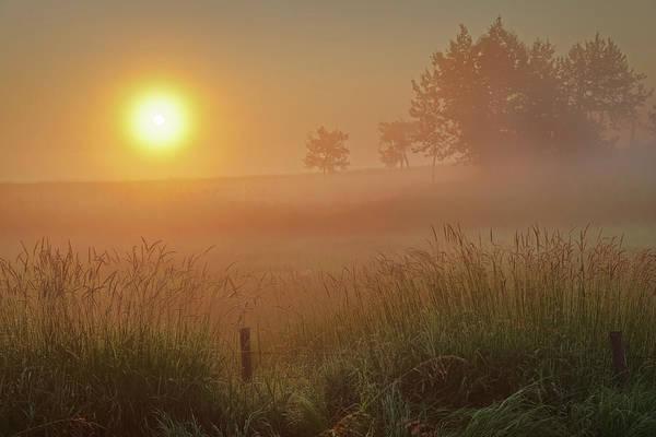 Golden Morning Poster