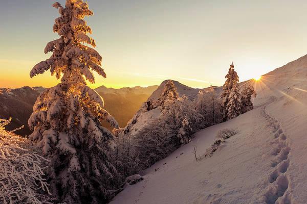 Golden Winter Poster