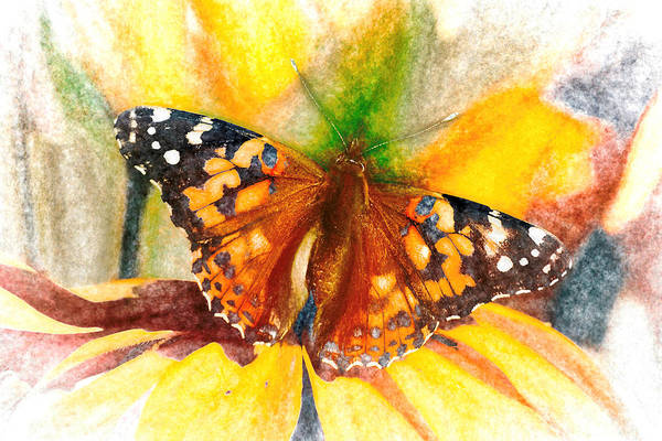 Gorgeous Painted Lady Butterfly Poster