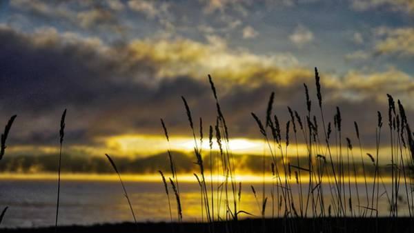 Grassy Shoreline Sunrise Poster