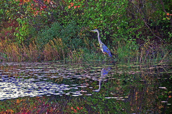 Poster featuring the photograph Great Blue Heron In Autumn by Wayne Marshall Chase
