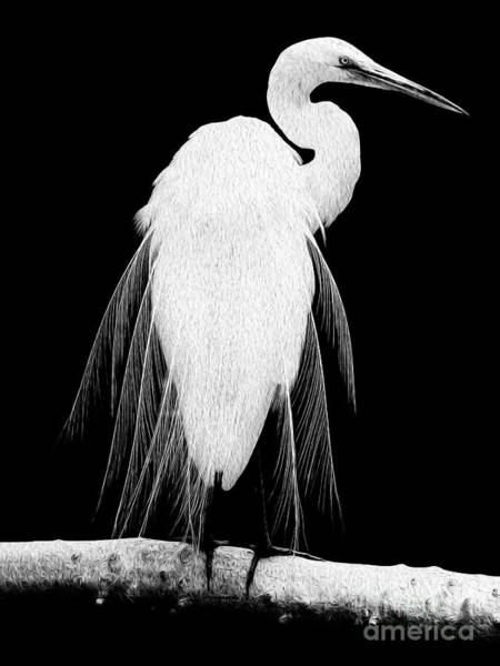 Great Egret In Full Bloom I - L Poster