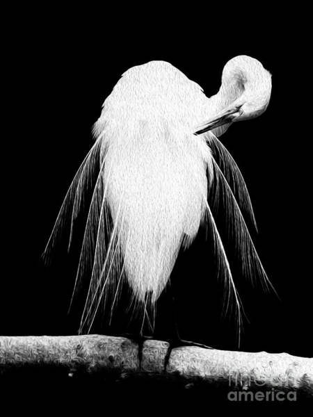 Great Egret In Full Bloom 3 Poster