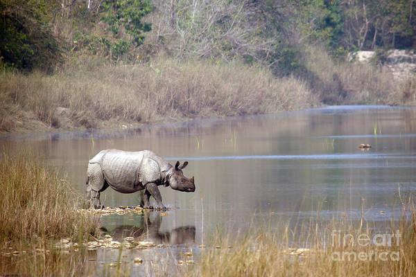 Greater One-horned Rhinoceros Specie Poster