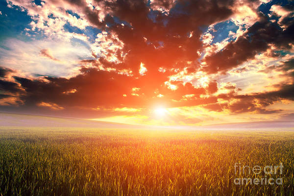 Green Field And Beautiful Sunset Poster