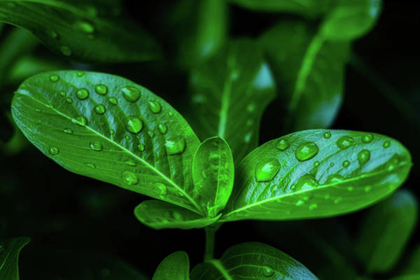 Green Leaf With Water Poster