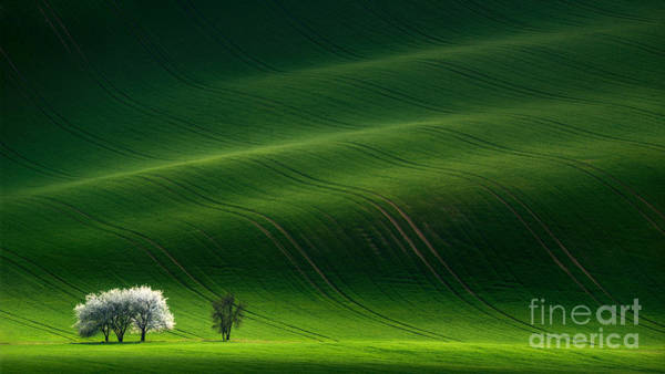 Green Rolling Spring Landscape With Poster