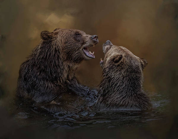 Grizzlies At Play Poster