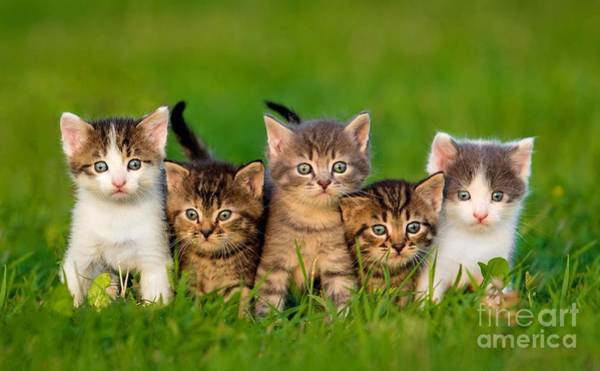 Group Of Five Little Kittens Sitting On Poster