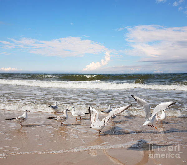Group Of Seagulls Ower Sea Poster