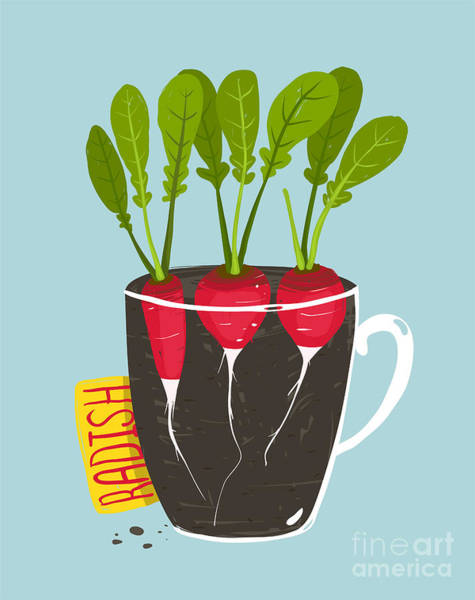 Growing Radish With Green Leafy Top In Poster