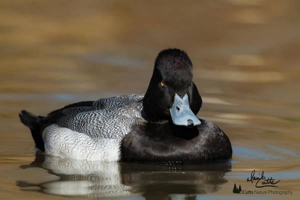 Grumpy Duck Poster