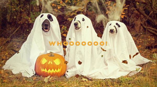Poster featuring the photograph Halloween Hounds by ISAW Company
